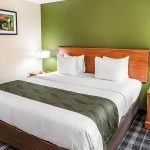 Queen Bed at Quality Inn & Suites Albany